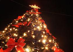 Aoc Terra Groningen : Aoc terra versiert kerstboom groninger grote markt nationale