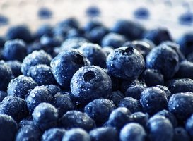 Normal_blueberry-3460423__340